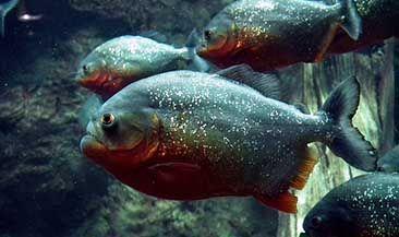 Электронная торговля рыбой. Какой формат выберет Россия?