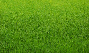 Благоустройство газона в Нижегородском кремле обойдется в полтора миллиона рублей