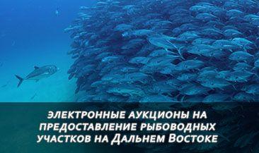 ФАС: аукционы на предоставление рыбоводных участков Дальнего Востока должны проходить в электронной форме