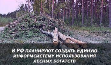 В России планируют создать Единую информсистему использования лесных богатств