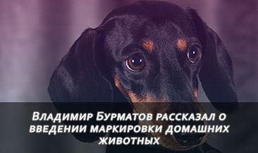 Владимир Бурматов рассказал о введении маркировки домашних животных